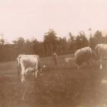 gardien de vaches, Jolieu photo