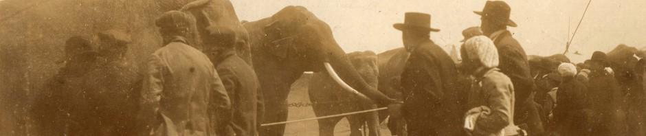 Éléphants de passage à Perpignan.